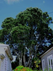 Unitary plan tree protection