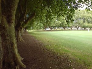 800px-Victoria_Park_Auckland_Eastern_End_Trees