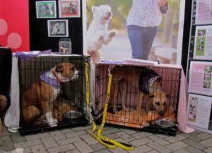 Shelter dogs Tessa and Mia