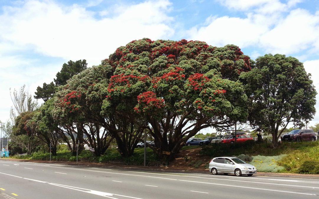 Waitematā Local Board supports campaign to retain the Pohutukawa 6