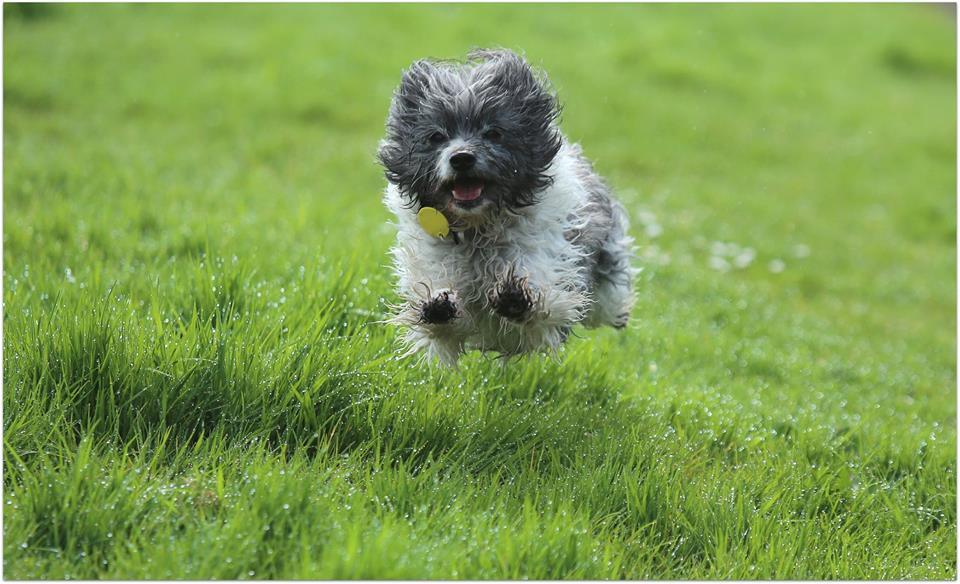 New dog access rules in Albert- Eden