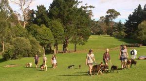 camberlain-park-dog-walkers